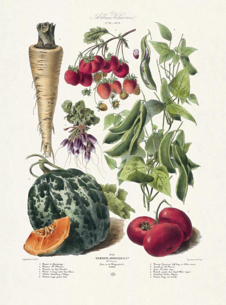 zöldségek és gyümölcsök felállítása mi az erekció és hogyan lehet növelni
