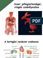 a pénisz mikrocirkulációja