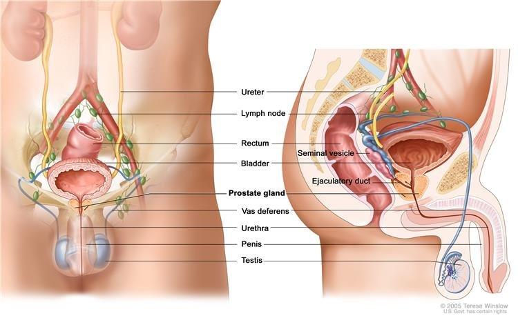 gyakorlatok a pénisz felállításához pénisz maximális mérete