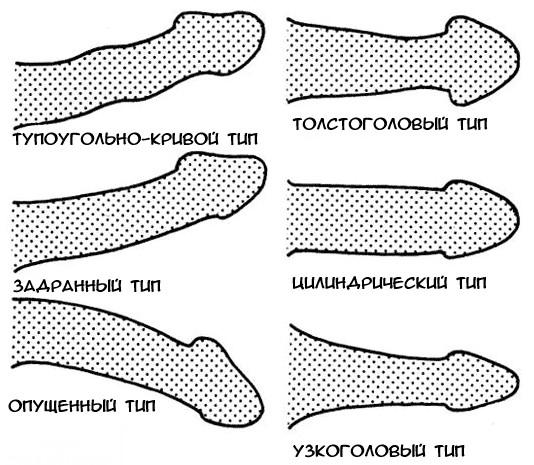 mérje meg a pénisz szélességét hogyan lehet bekenni a péniszt