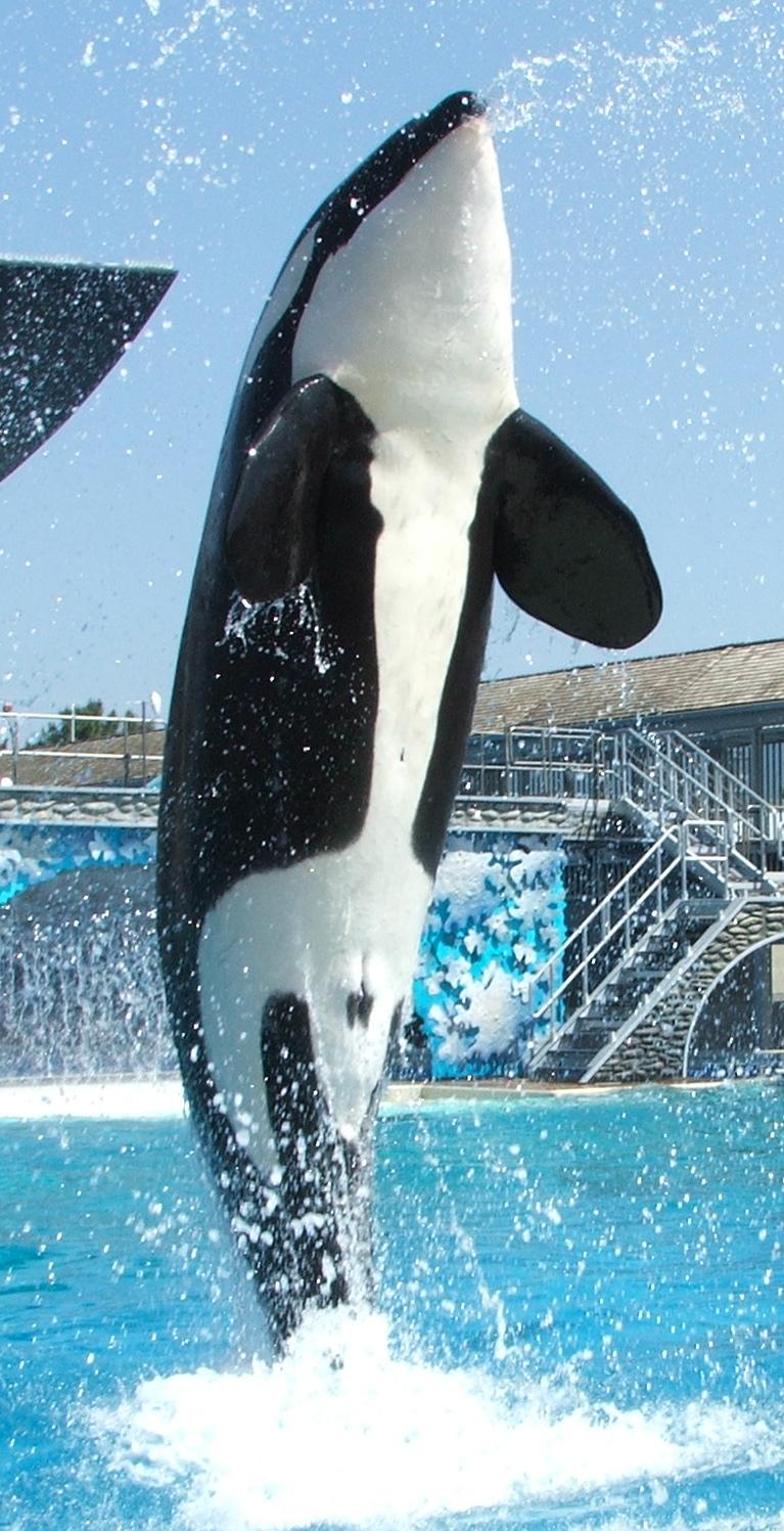 orcas pénisz pénisz és egér füle