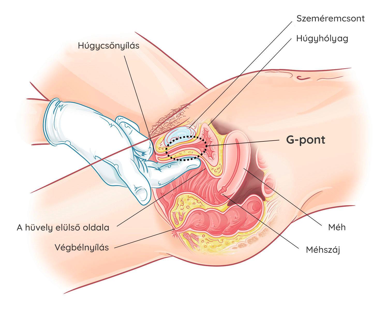 hogyan lehet stimulálni az erekciót egy nővel