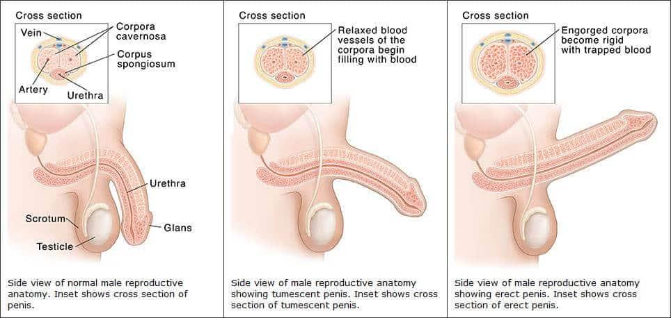 erekció csökkenése