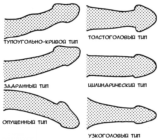 mi határozza meg a pénisz vastagságát