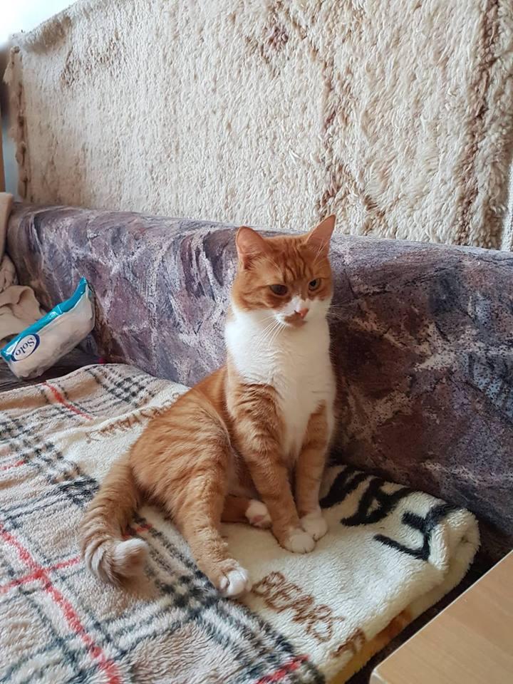 9 jel, amiből tudod, hogy a macskád szeret (vagy elvisel) - Dívány