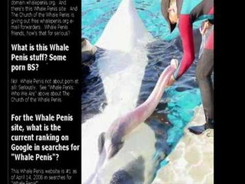 orcas pénisz nincs erekció alkoholos mérgezésben